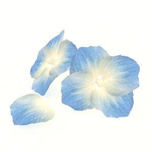 3D hydrangea flower bloom blossom model