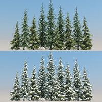 10 10 Atlas Cedar Trees