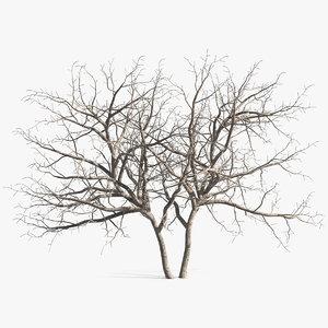 3D fig tree bark trunks