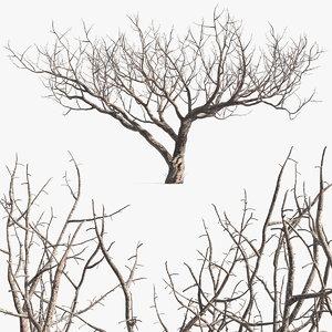 3D fig tree bark model