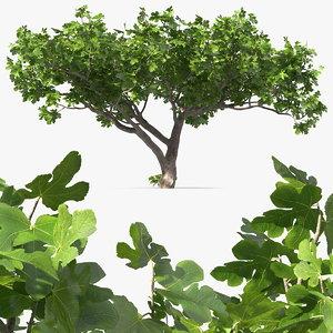 3D big fig tree