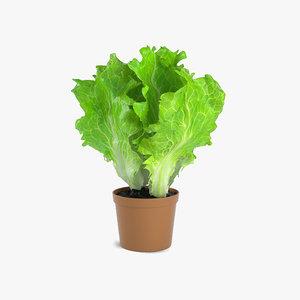 lettuce plant 3D