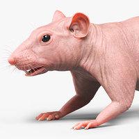 Rat Hairless