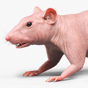 rat skin model