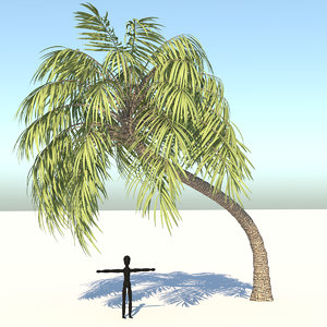 3D realistic curly palm tree