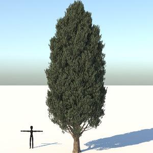 3D cypress oak tree model