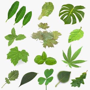 leaves 10 3D