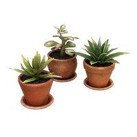 Potted Plants Bundle 2C