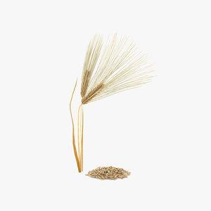 3D barley grain model