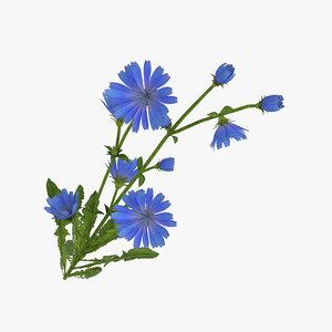 3D plant nature flower model