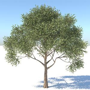 realistic apple tree 3D
