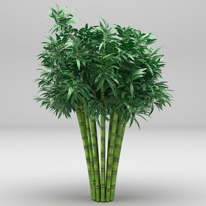 realistic bamboo tree plant 3D