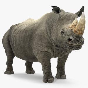 rhino adult standing pose 3D model