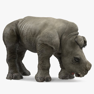 3D model baby rhino drinking pose