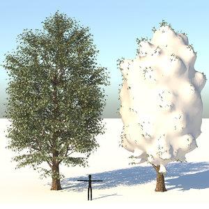 3D season carolina poplar tree