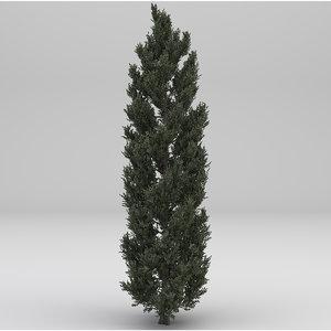 tuscan cypress tree 3D model