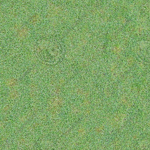 G269 short dewy grass texture