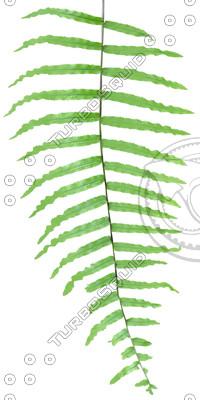 Branch_tropic_11.tga