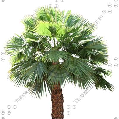 Palm_36.tga