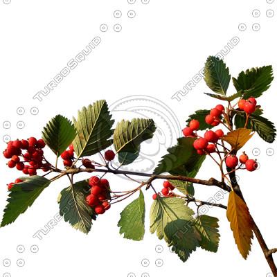 Branch_s_14.tga