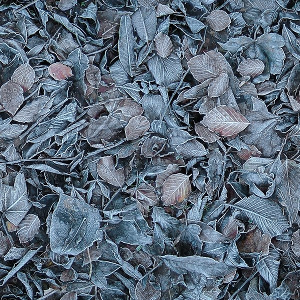G122 frosty dead leaves texture