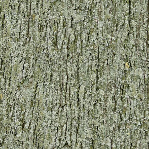 TBRK mossy tree bark texture