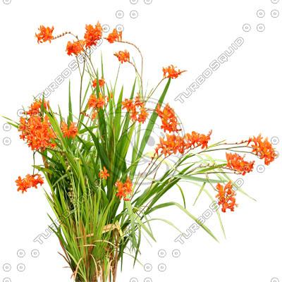 Flowers_N_05.tga