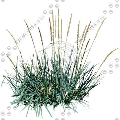 Grass_17.tga