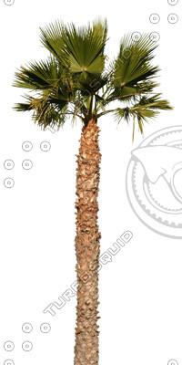 Palm_16.tga