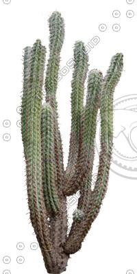 Desert_plants_25.tga