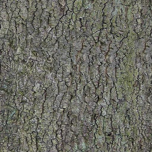 tree bark texture 001.jpg