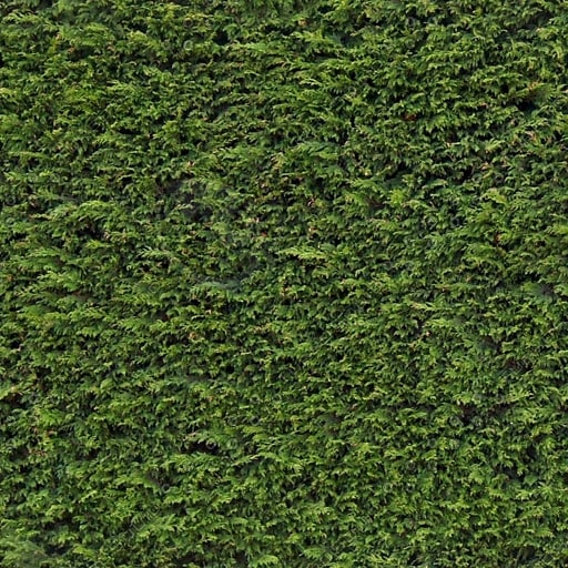 H001 hedge hedgerow hedging texture