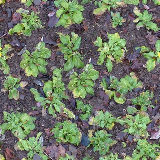 G297 garden border plants texture