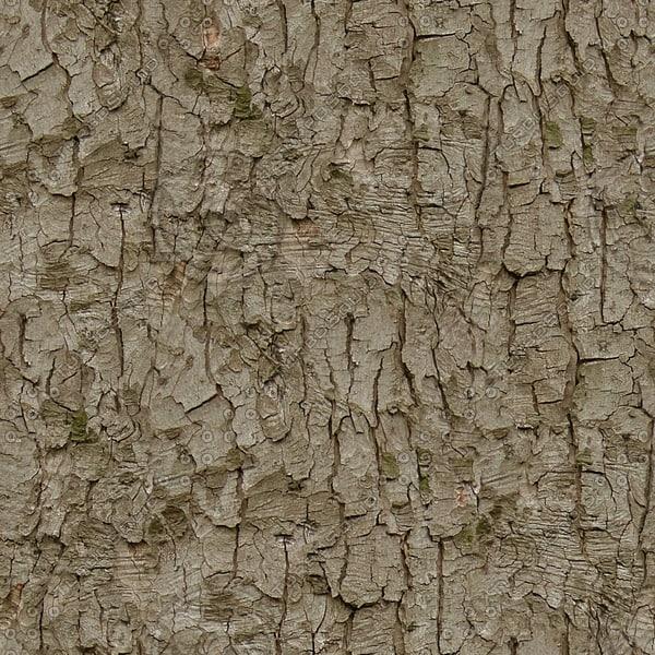 BRKT fir tree bark scots pine texture