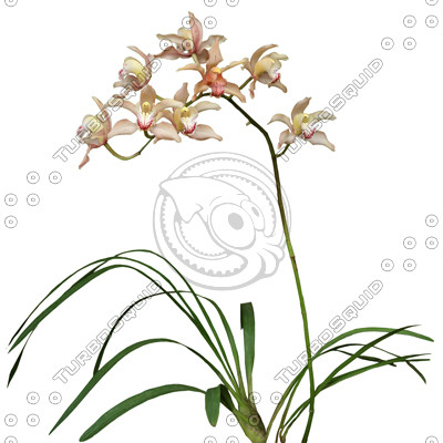 FlowerL_37.tga
