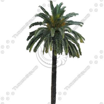 Palm_N_06_01.jpg