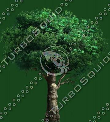 tree_07.tga