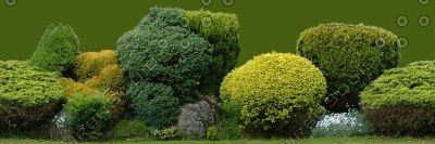 TRL004 treeline hedge hedgeline texture