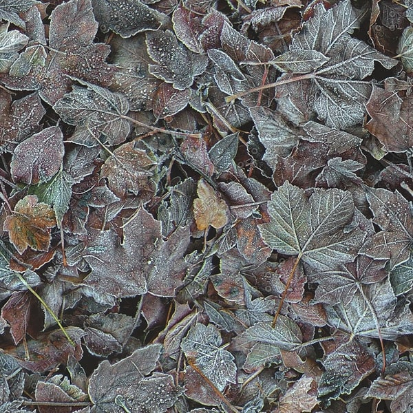 G130 frosty leaves texture