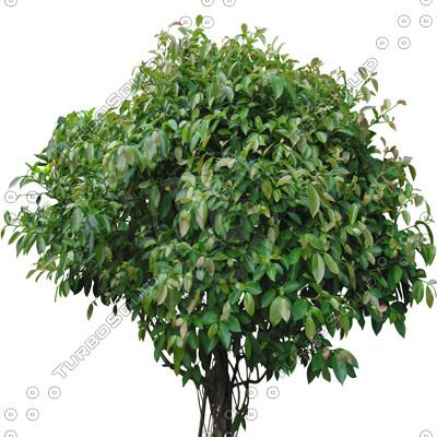 Tree_2.tga