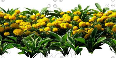 Flower_H_36.tga