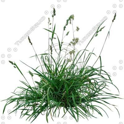 Grass_05.tga