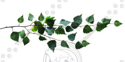 Branch_s_29.tga