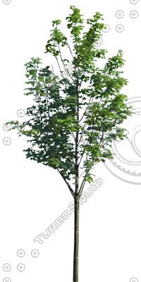 Euro_tree_5.tga