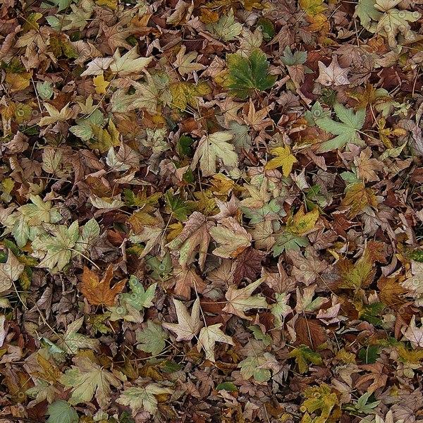 G115 dead leaves debris texture