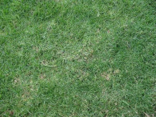 grass_2918 tm.jpg
