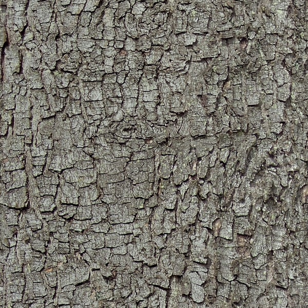 bark010_1024.jpg