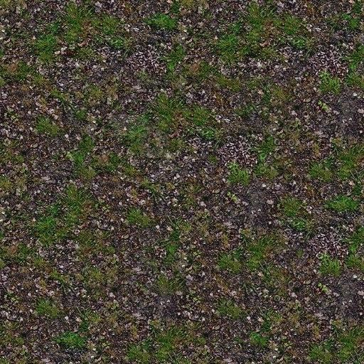 G208 forest floor grass