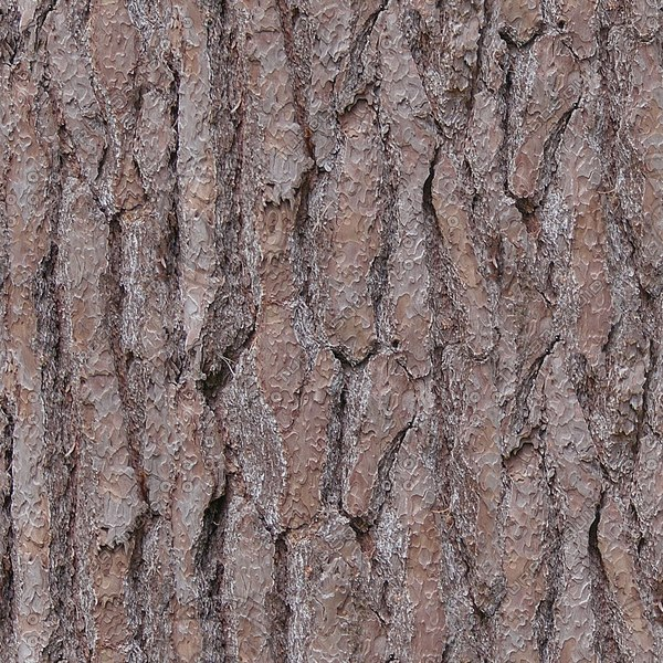 TBRK044 fir tree bark texture textura