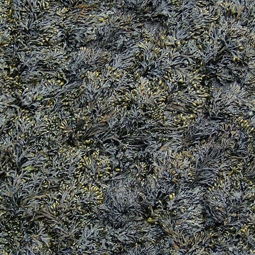 G200 seaweed marine alga texture